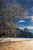 picture of engadine  - Falling snow and a branch in front of a snow covered landscape in the Swiss Alps - JPG