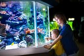 image of zoo  - Happy laughing boy and his adorable toddler sister cute little curly girl watching fishes in a tropical aquarium with coral reef wild life having fun together on a day trip to a modern city zoo - JPG