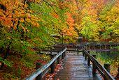 picture of board-walk  - Wet board walk in autumn time - JPG
