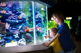 image of little sister  - Happy laughing boy and his adorable toddler sister cute little curly girl watching fishes in a tropical aquarium with coral reef wild life having fun together on a day trip to a modern city zoo - JPG