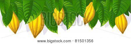 Cocoa Pod And Leaf Border - Vector Illustration