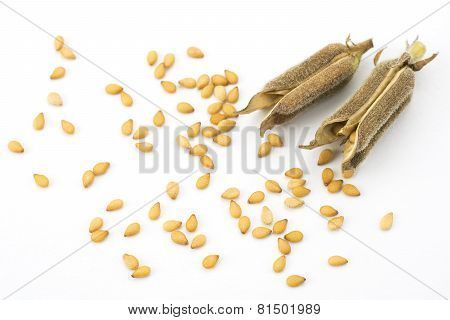 Sesame seeds and two pods