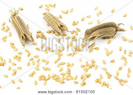 Sesame seeds and three pods