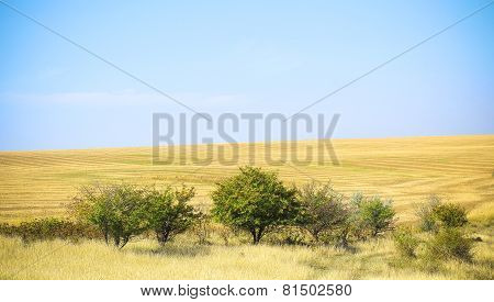 Tree In A Field On A Sunny Day. Landscape