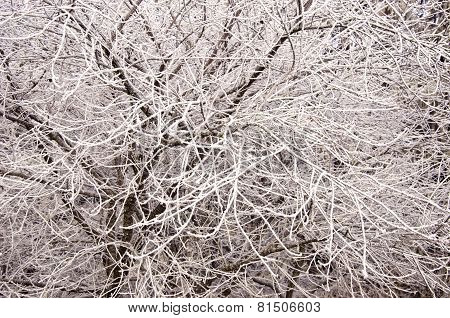 Abstract Beautiful Winter Tree Branch Covered Snow Hoarfrost Background