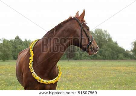 Portrait Of Chestnut Horse With Dandelion Circlet
