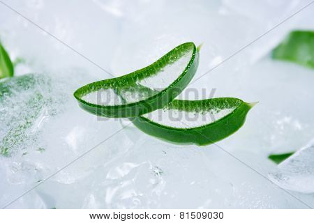 Aloe Vera on ice