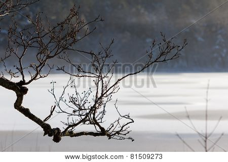 Tree branch in front of lake