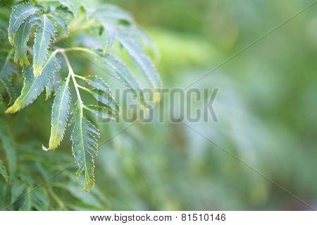Blurry Leaves