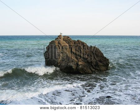 Sea Gull On Rock In Sea