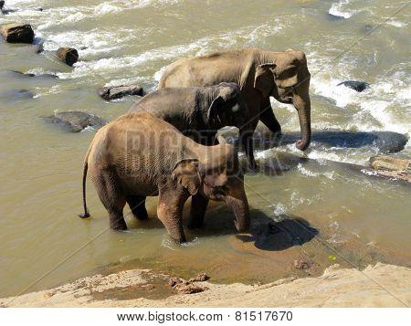 Wild nature. Elephants.