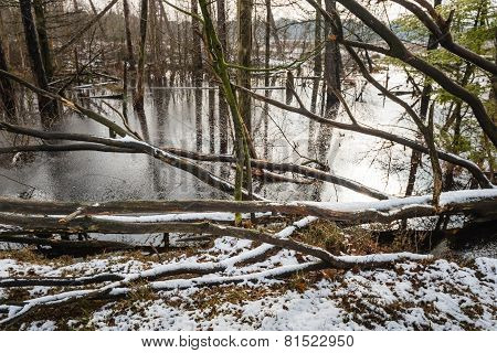 Flooded Trees In Wintertime
