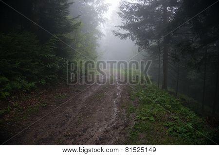 Alpine Forest Nature