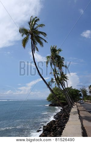 Coconut Trees Line Sidewalk And Car Driving Down Road Along Rocky Shore
