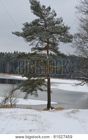 A Lonely Tree In A Snowy Landscape