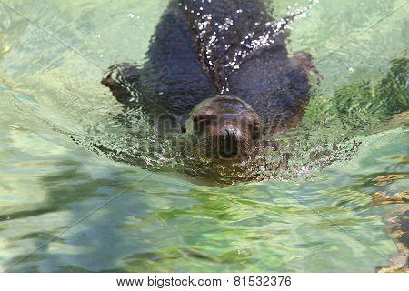 Seal At The Zoo