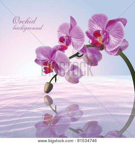 Beautiful background with orchid. Vector.