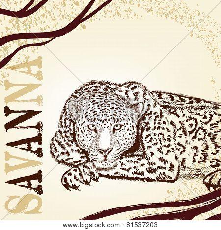 Savanna Background With Hand Drawn Leopard
