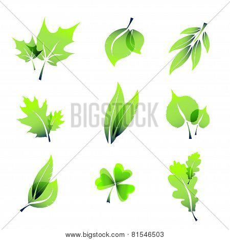 Green Summer Leaves Icons