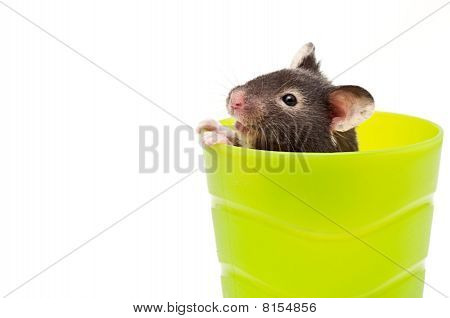 Hamster In A Cup