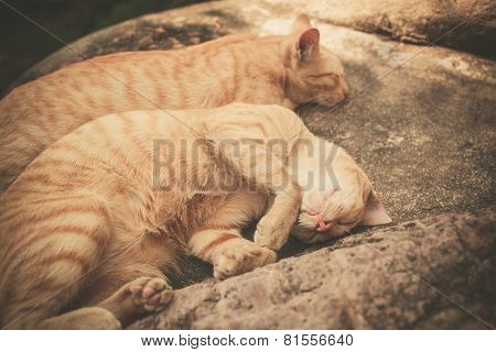 Two Cats Sleeping On A Rock