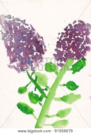 Child Picture Of Syringa (lllac) Watercolor Illustration