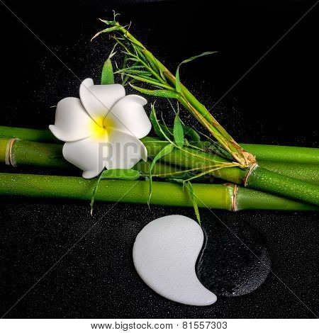 Spa Setting Of White Frangipani Flower, Symbol Yin Yang And Natural Bamboo With Leaves On Zen Basalt