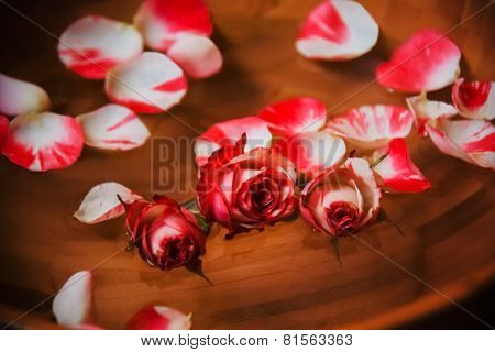 Rose Petals And Rose In Bowl With Water