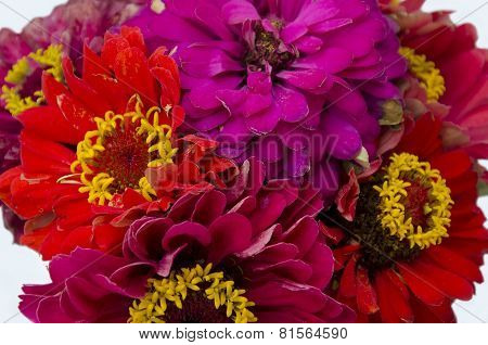 Bouquet Of Red Flowers Majors