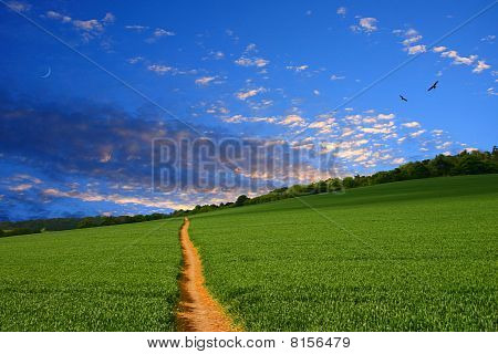 Straight Farmland Path