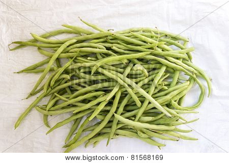 Freshly plucked green beans kept on an white background