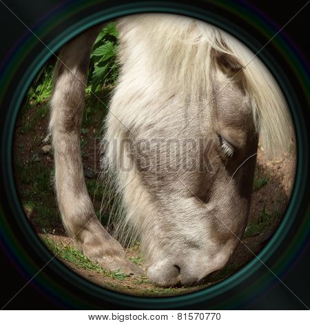 Pony Head Closeup In Objective Lens