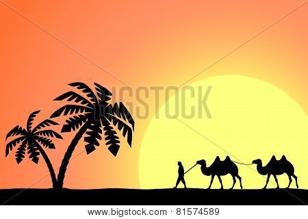 Silhouette of man with camels at sunset.