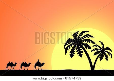 Man on the camel in palm trees at sunset.