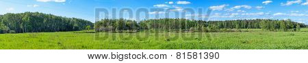 summer forest and blue cloudy sky panoramic