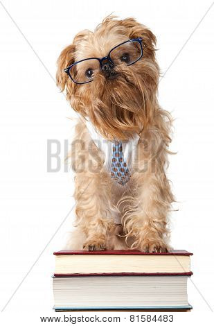 Serious Dog In Glasses