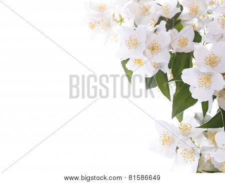 Jasmine White Flower