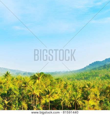 Beautiful Tropic Landscape