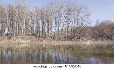 Line Of Trees At Backwater