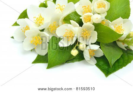 Jasmine Flower Bouquet Isolated On White