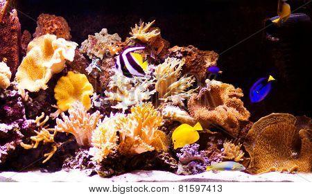 aquarium with fishes