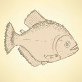 image of piranha  - Sketch dangeous piranha in vintage style vector - JPG