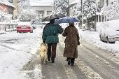 pic of dog-walker  - Man woman and dog walking on the street while snowing - JPG