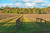 stock photo of winter landscape  - Beautiful winter vineyard in the South Australia - JPG