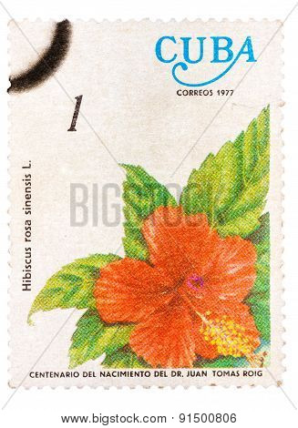 Samp printed in Cuba shows the flower Hibiscus rosa-sinensis