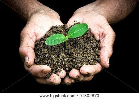 Botany Concept