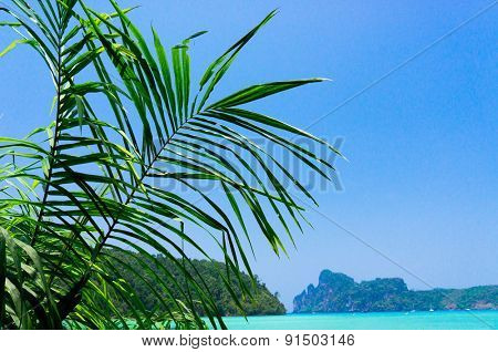 Green View Palms Overhanging