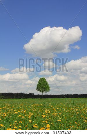Lonely Tree In Dandelion Meadow