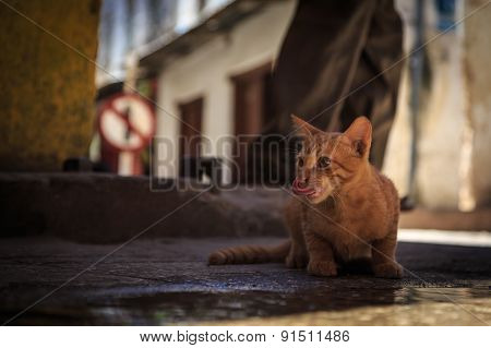 Skinny Stray Cat Drinking From A Pool On The Street