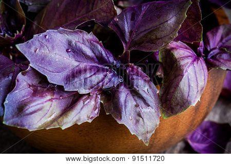Beam Of Purple Basil In The Bowl Closeup